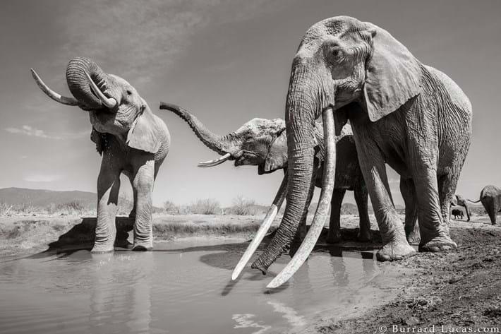 Kenya-elephant-tusker-8_2019-03-13.jpg