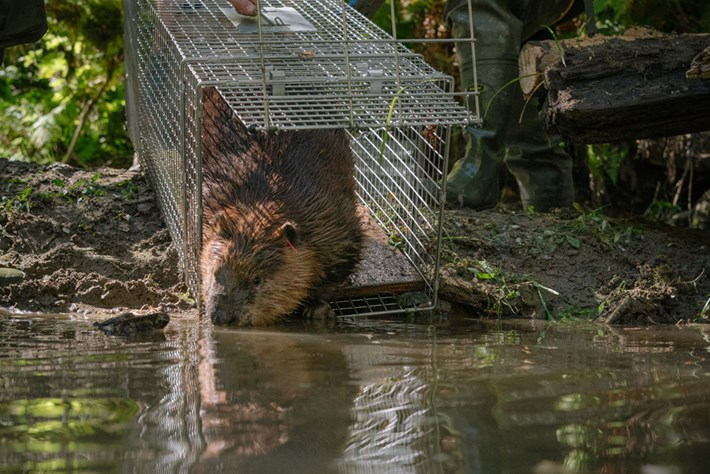 beaver-release_page_2019-03-29.jpg