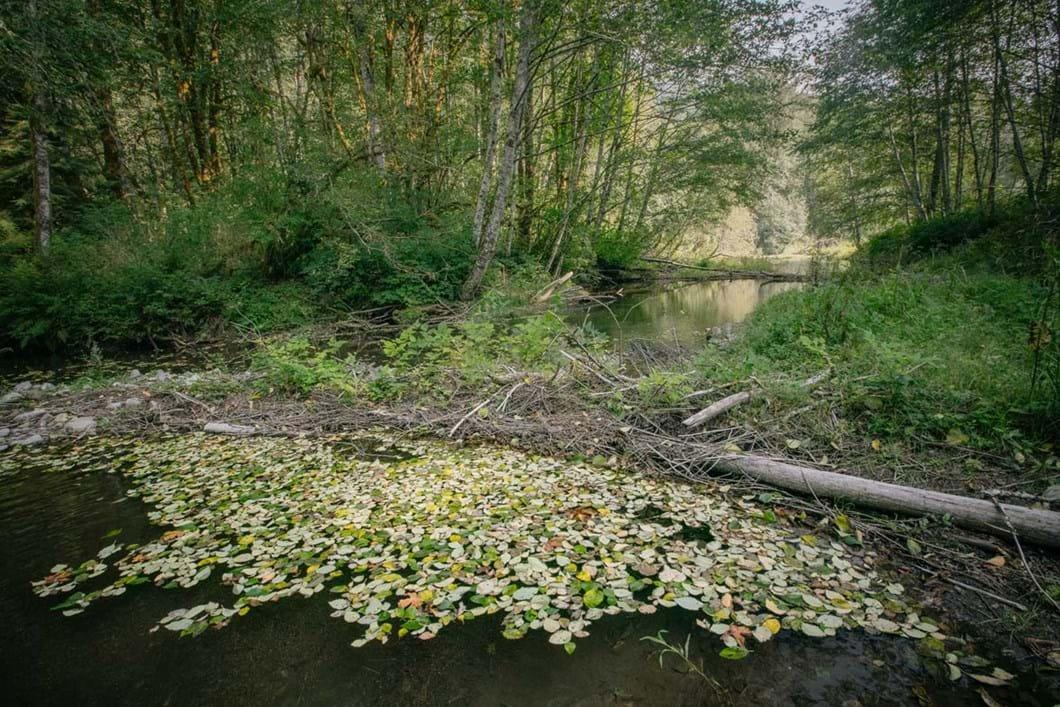 river-Washington-beaver-dam_2019-03-29.jpg
