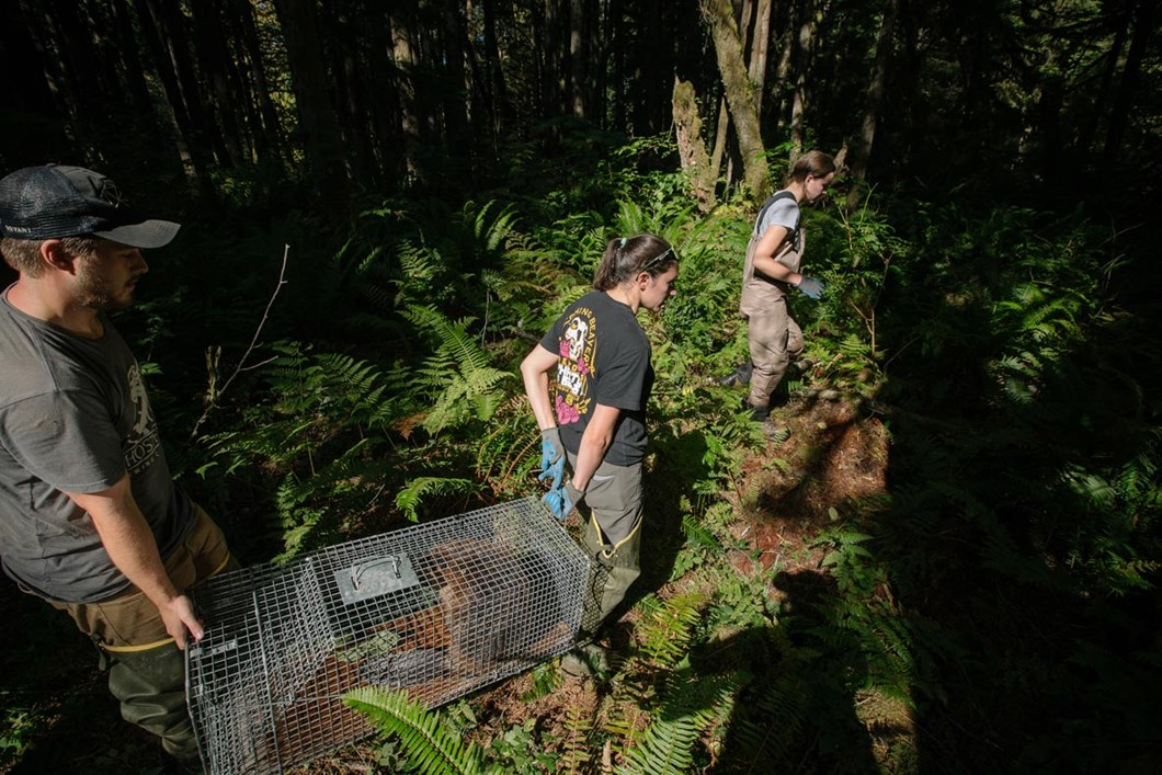 beaver-on-route-to-release_2_2019-03-29.jpg