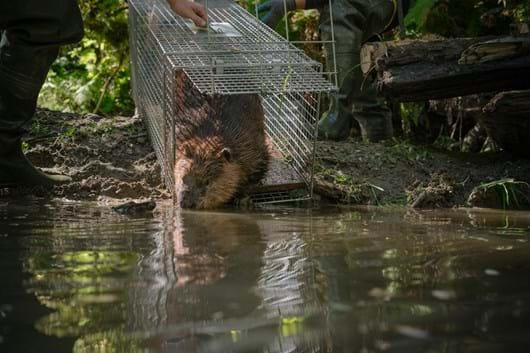 beaver-release_river_2019-03-29.jpg