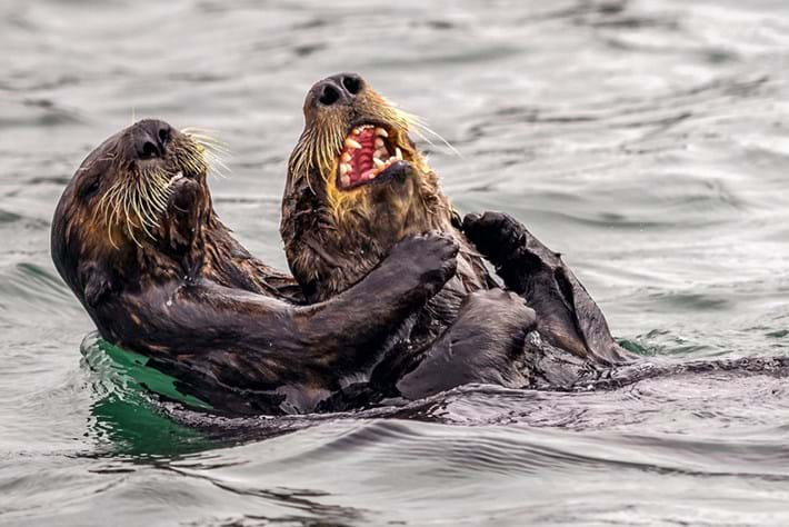 Farting penguins & laughing owls: The best entries so far in the Comedy Wildlife Photography Awards