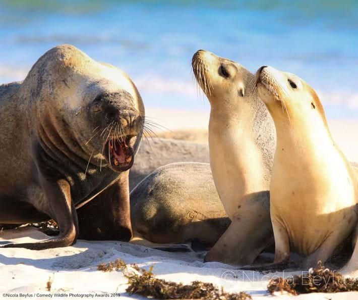 seals-funny_2019-05-16.jpg