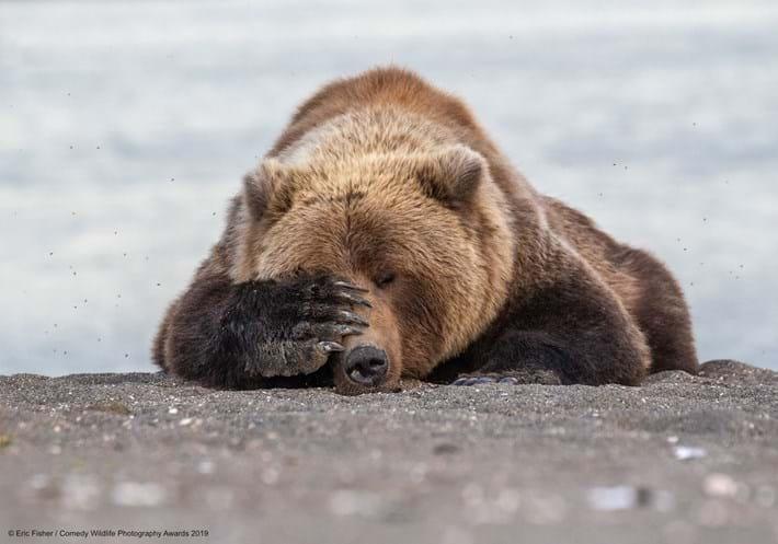 bear-covering-eyes_2019-05-16.jpg