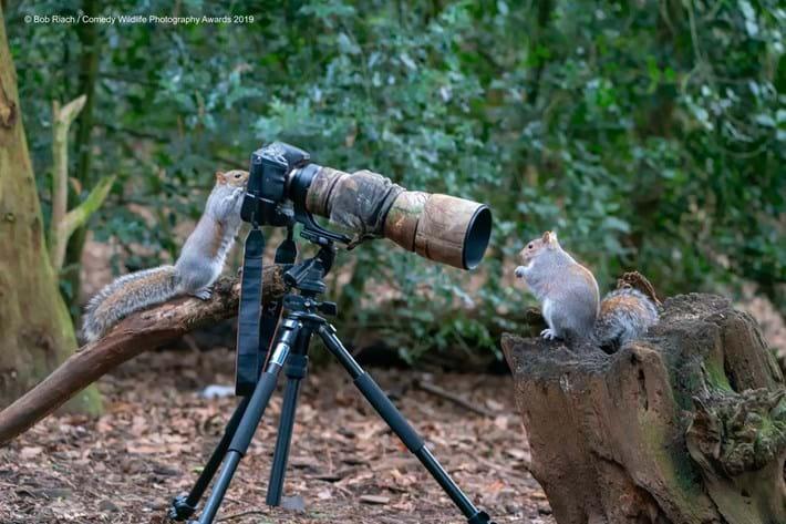 squirrel-taking-photo_2019-05-16.jpg