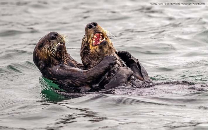 sea-otter-tickle-fight_2019-05-16.jpg