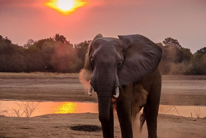 Elephant-Botswana-lifts-ban-on-elephant-hunting_page_2019-05-24.jpg