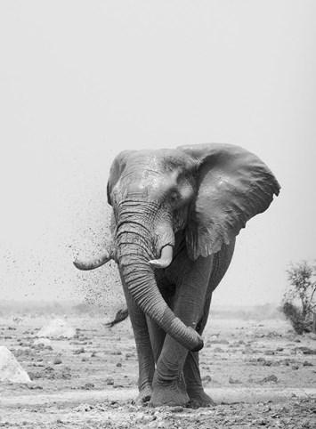Elephant-mud_2019-05-24.jpg