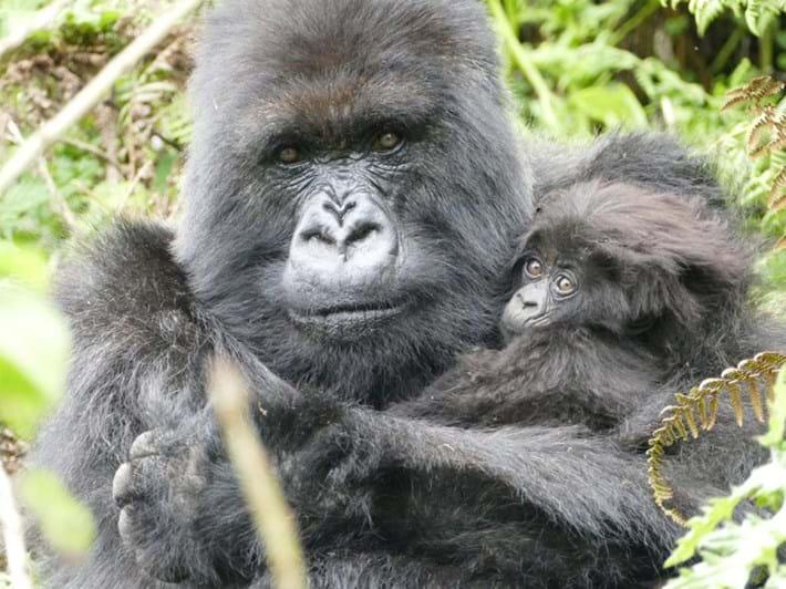 Poppy-gorilla-with-last-infant_2019-05-30.jpg