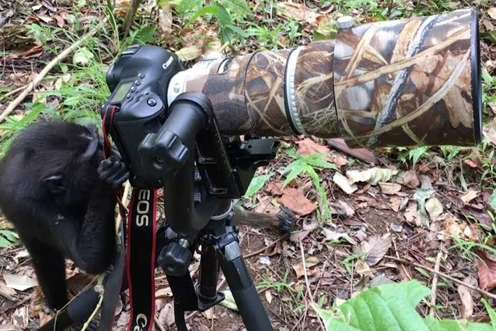 Watch: Monkey tries out photographer's camera (even wildlife is into wildlife photography these days)