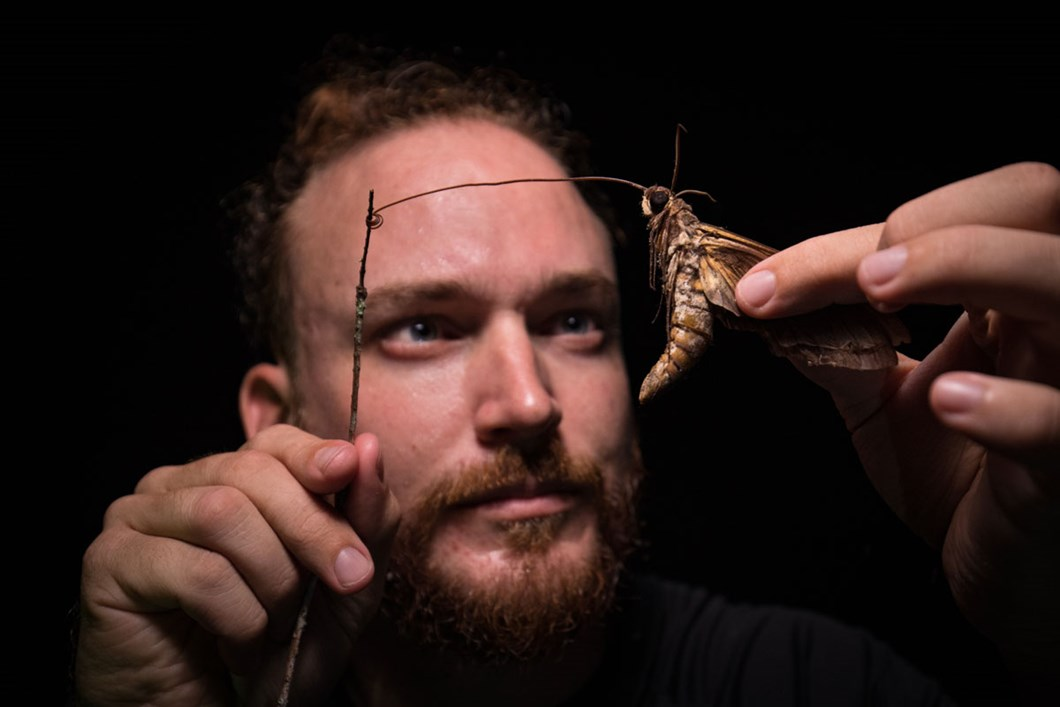 giant-sphinx-moth-proboscis_2019-07-24.jpg