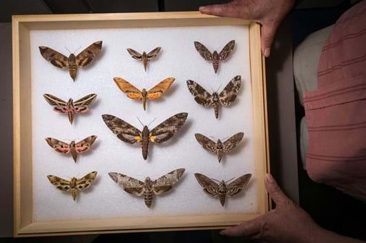 moth-specimens_2019-07-24.jpg
