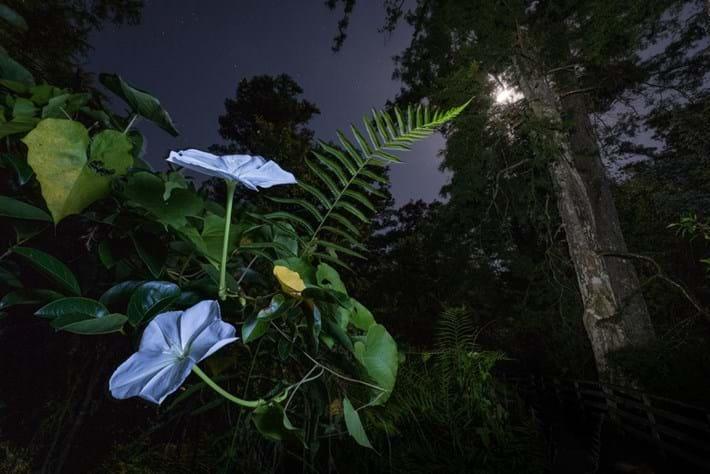 moonflower_2019-07-24.jpg