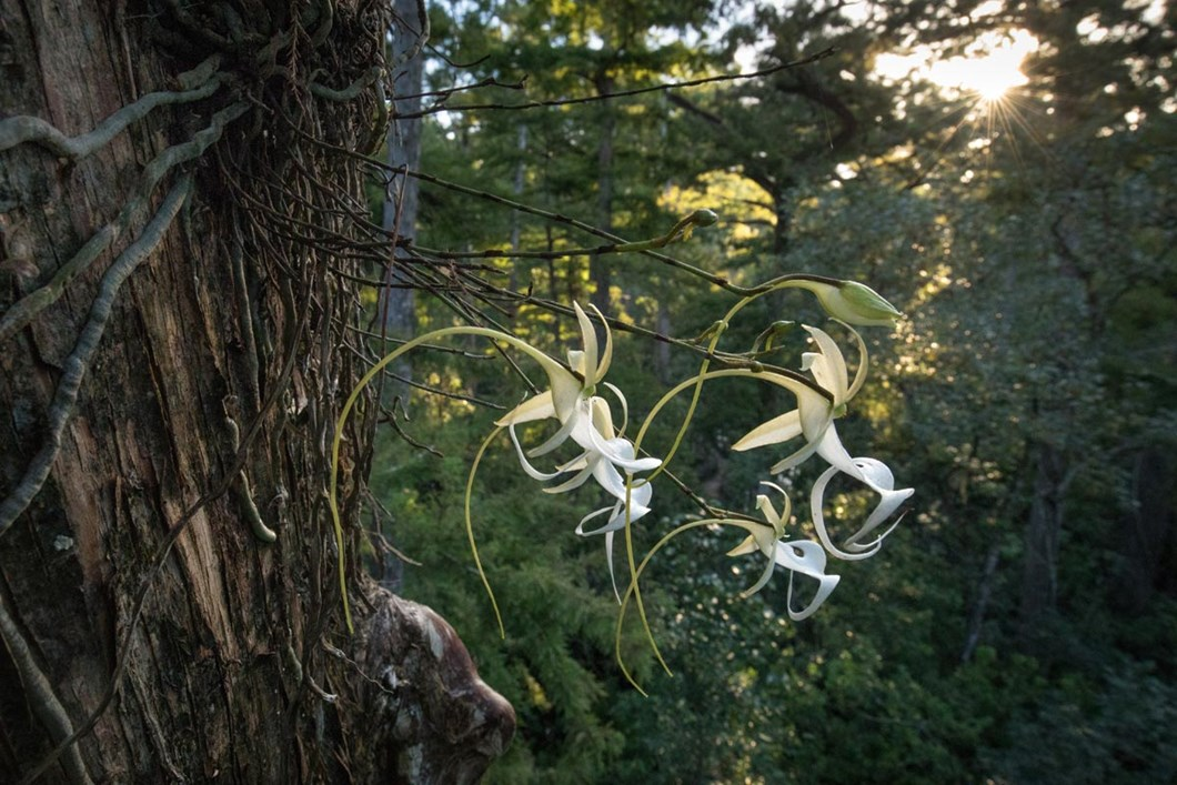 super-ghost-lily_2019-07-24.jpg