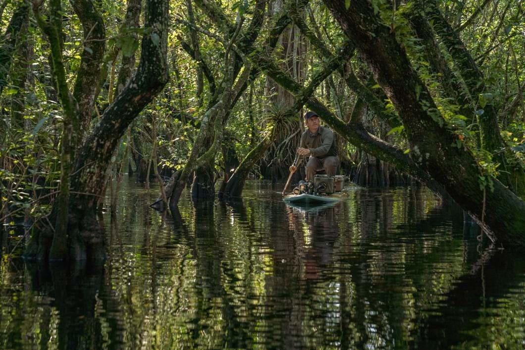 Carlton-Ward-swamp_2019-07-24.jpg