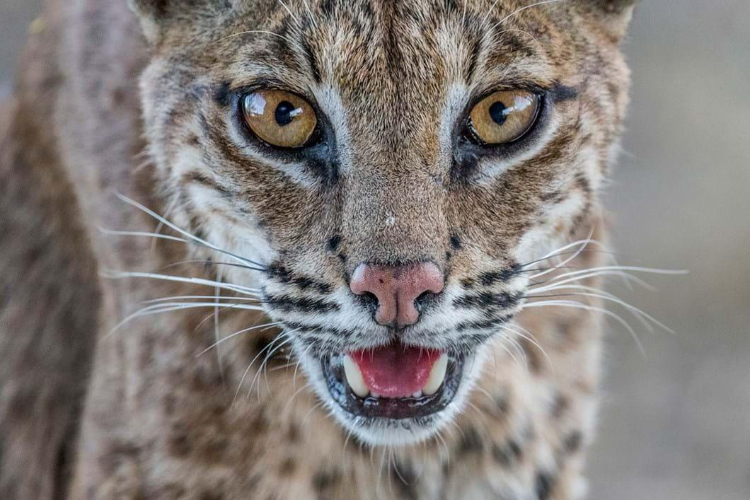 Bobcats-16_2019-08-22.jpg