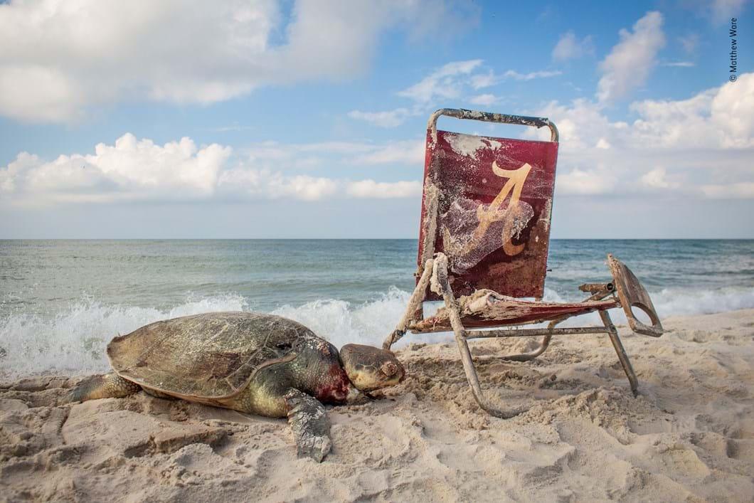 turtle-Matthew-Ware-Wildlife-Photographer-of-the-Year_2019-10-13.jpg