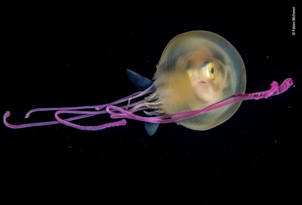 jellyfish-Fabien-Michenet-Wildlife-Photographer-of-the-Year_2019-10-13.jpg