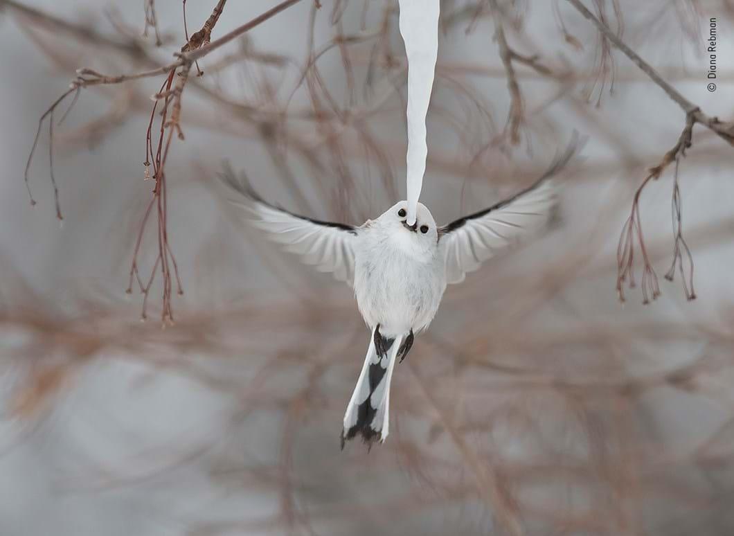bird-ice-Diana-Rebman-Wildlife-Photographer-of-the-Year_2019-10-13.jpg