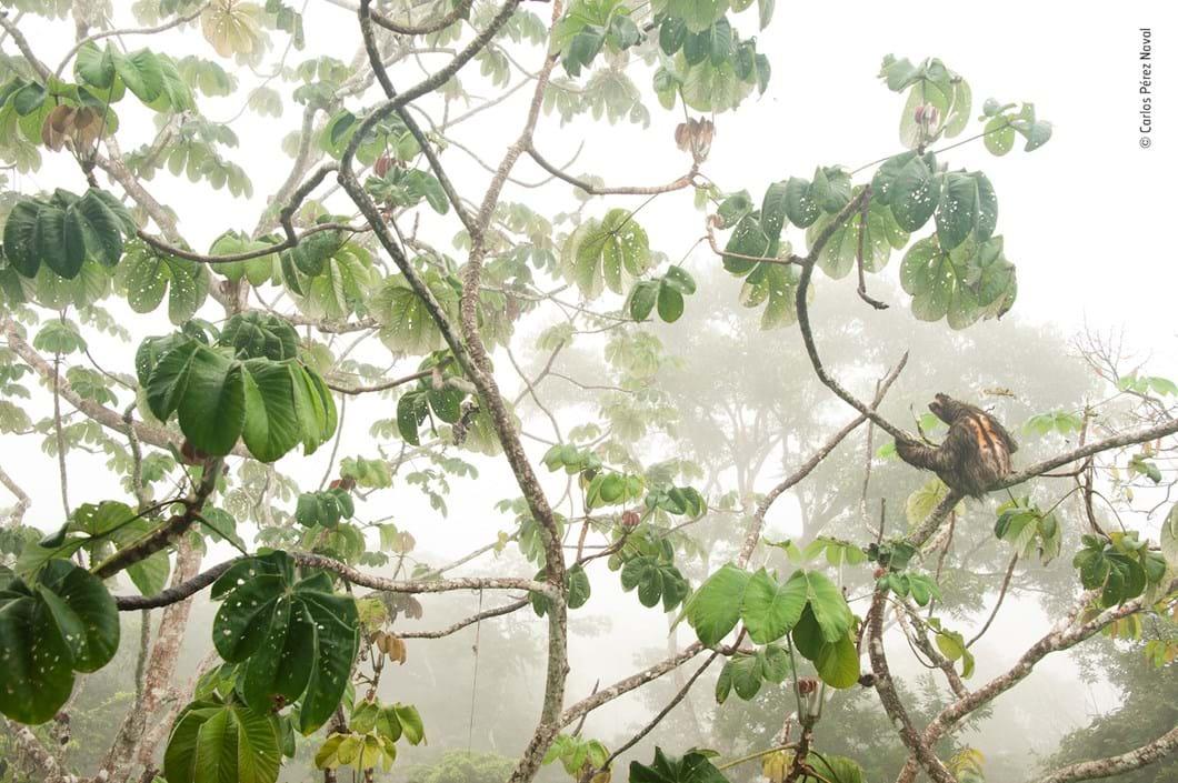 Sloth-Carlos-Perez-Naval-Wildlife-Photographer-of-the-Year_2019-10-13.jpg