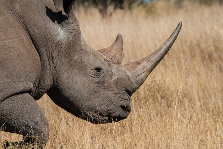 rhino_2019-10-20.jpg