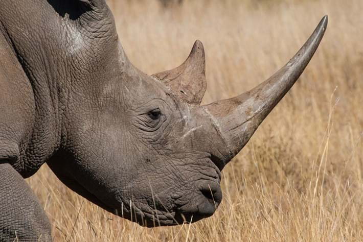 South Africa's Kruger Park gets gunshot detection technology to fight rhino poaching