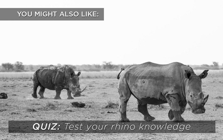 rhino_quiz-related-content_2019-10-20.jpg