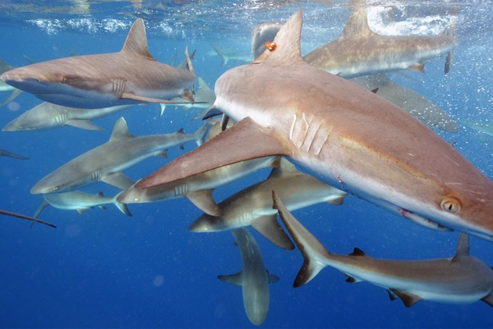 Are we ready for shark conservation to succeed?