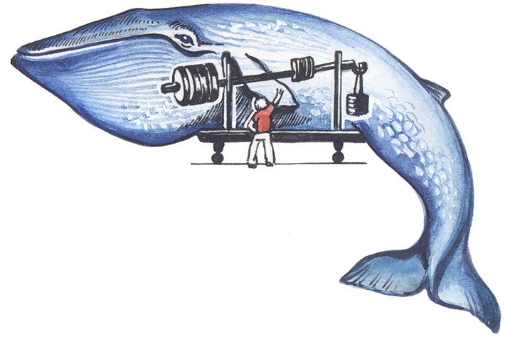 biggest-whale-diagram_2019-10-07.jpg