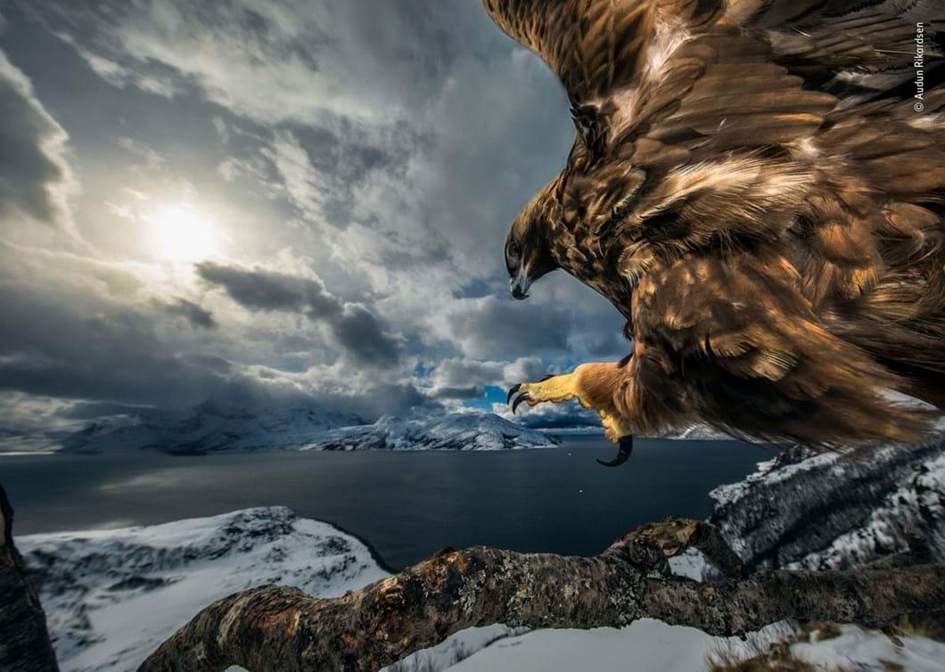 Audun-Rikardsen-Wildlife-Photographer-of-the-Year_2019-10-17.jpg