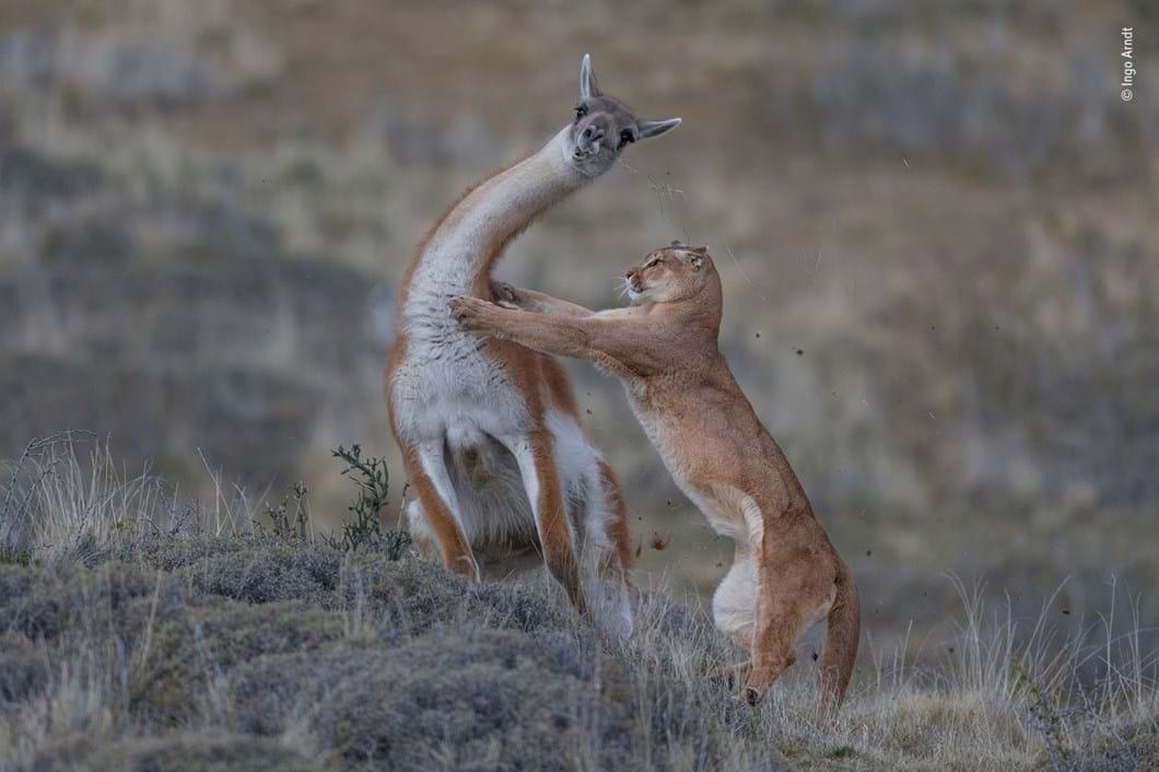 Ingo-Arndt-Wildlife-Photographer-of-the-Year_2019-10-17.jpg