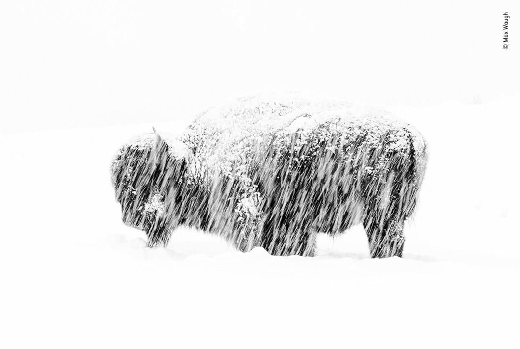 Max-Waugh-Wildlife-Photographer-of-the-Year_2019-10-17.jpg