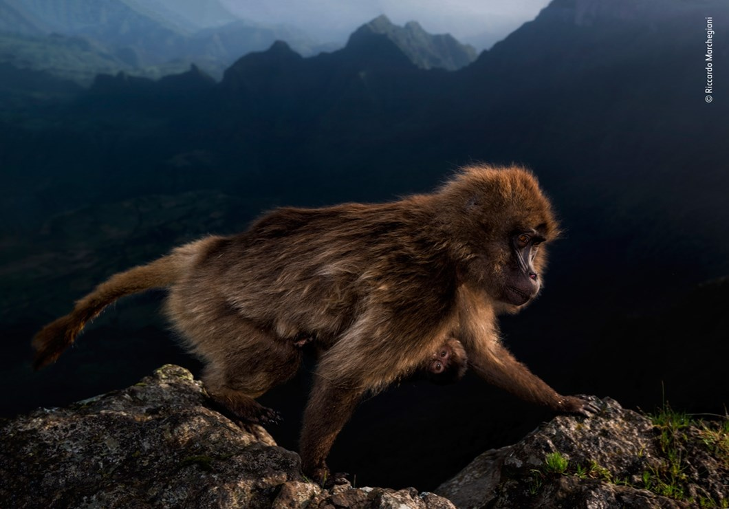 Riccardo-Marchegiani-Wildlife-Photographer-of-the-Year_2019-10-17.jpg