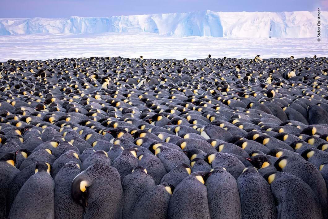 Stefan-Christmann-Wildlife-Photographer-of-the-Year_2019-10-17.jpg