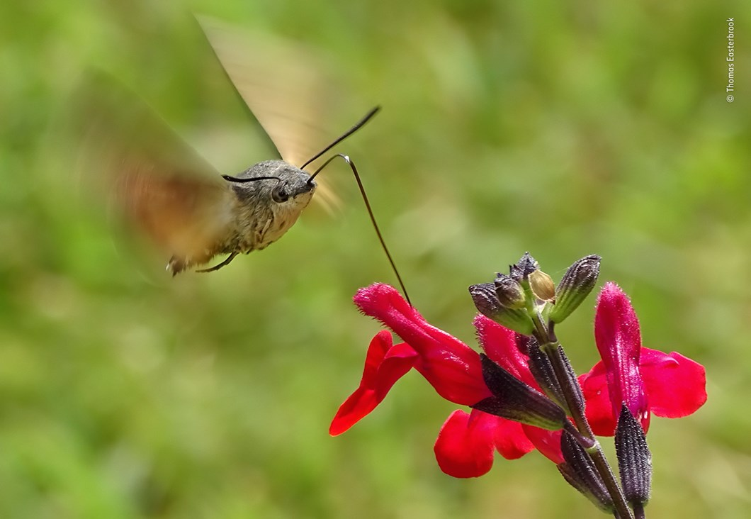 Thomas-Easterbrook-Wildlife-Photographer-of-the-Year_2019-10-17.jpg
