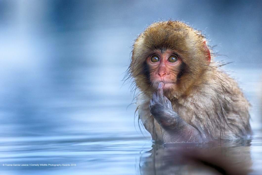 Txema-Garcia-Laseca-macaque_2019-11-13.jpg