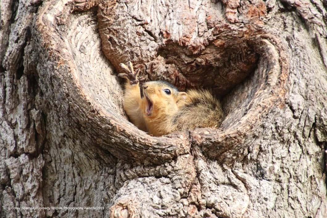 Corey-Seeman-squirrel_2019-11-13.jpg