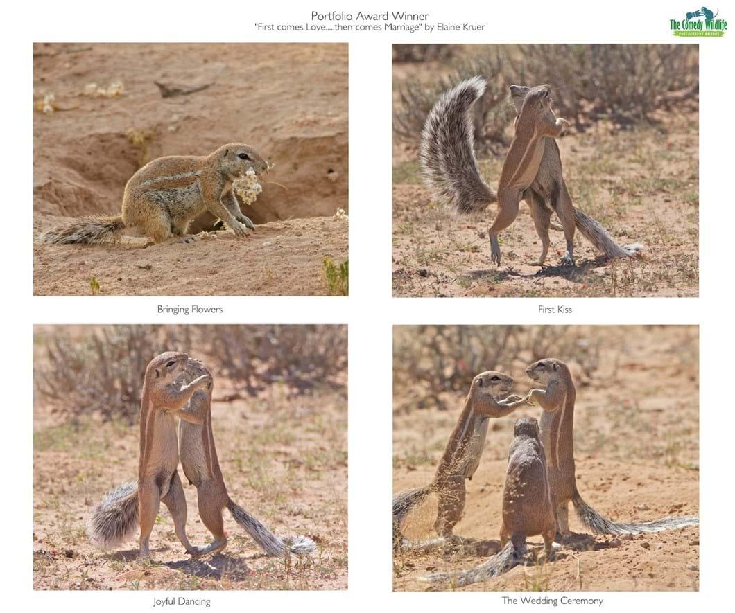 Elaine-Kruer-squirrels_2019-11-13.jpg