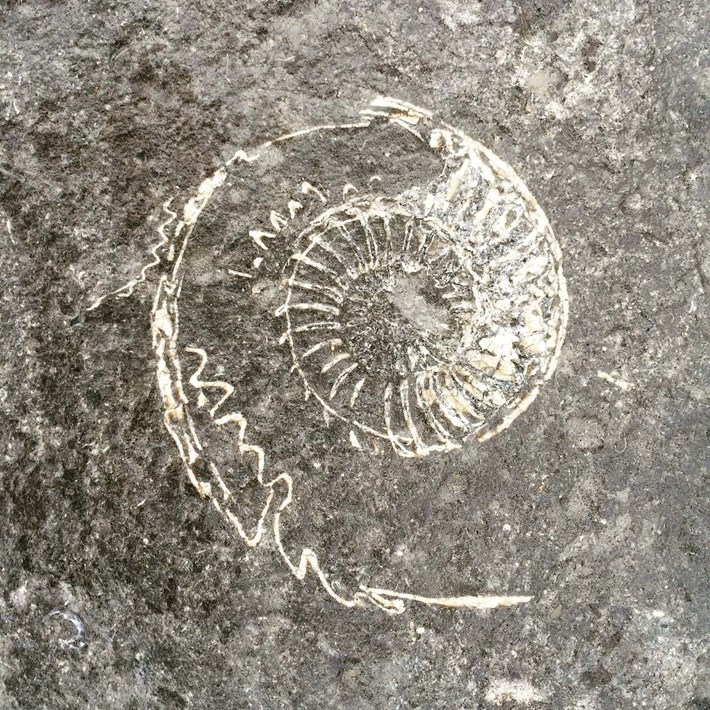 ammonite-fossil_2019-11-14.jpg
