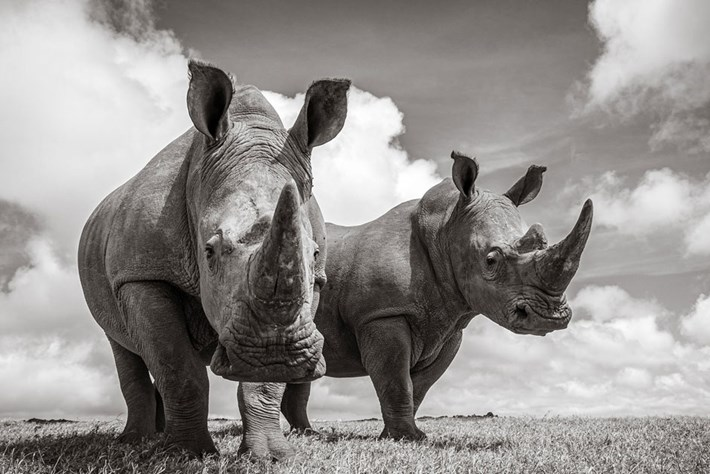 Incredible photos put you face to face with Kenya's rhinos