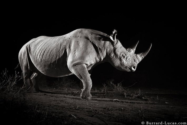 black-rhino-infrared_2019-12-03.jpg