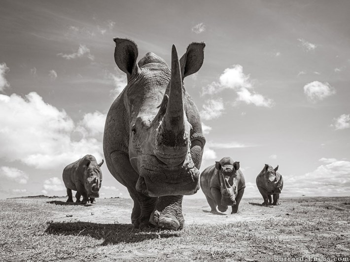 crash-rhinos_2019-12-03.jpg