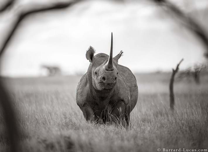 lewa-black-rhino_2019-12-03.jpg