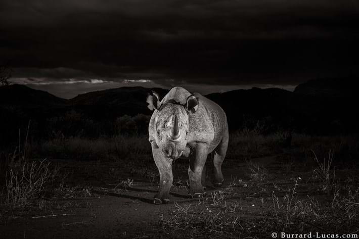 tsavo_black_rhino-night_2019-12-03.jpg