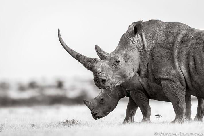 white-rhinos-solio_2019-12-03.jpg