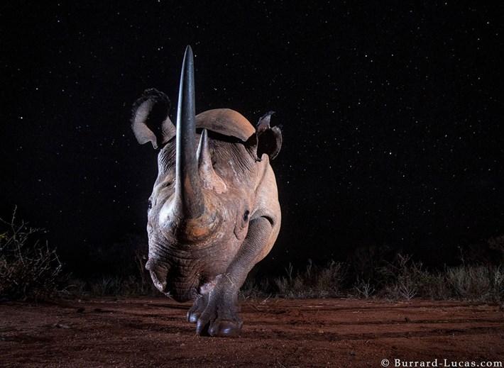black-rhino-under-stars_2019-12-03.jpg