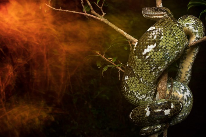 """Snakes, sloths & scorpions: The winning photos in this year's """"Capturing Ecology"""" competition"""