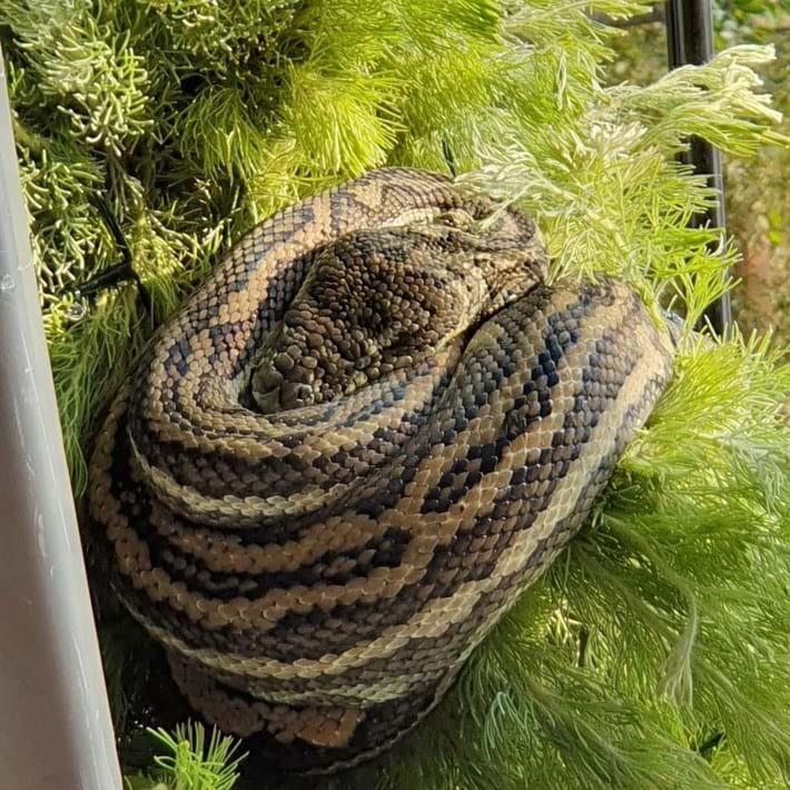 python-christmas-tree_2_2019-12-15.jpg