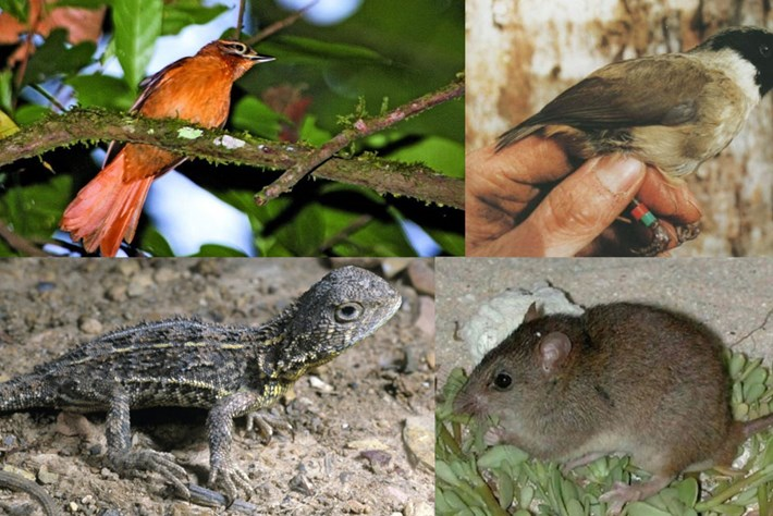 Faces of extinction: The species we lost in 2019