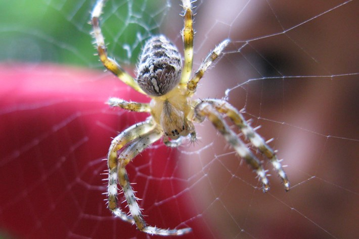 spider-on-web_page_2020-01-09.jpg